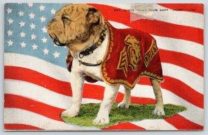 San Diego CA~Marine Corps Mascot~Sgt James Jolly Plum Duff~English Bulldog~1940s