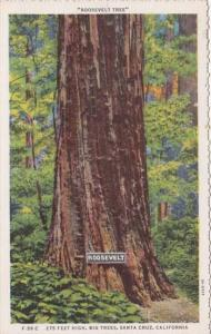 California Santa Cruz Big Trees The Roosevelt Tree Curteich