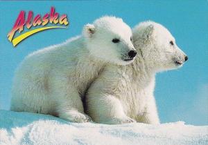 Alaska Arctic Alaska Polar Bear Cubs