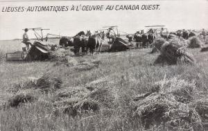 Harvesting , West Canada , 00-10s, Horses