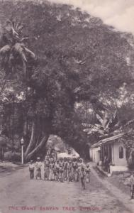 School Outing At The Giant Banyan Tree Ceylon India Postcard