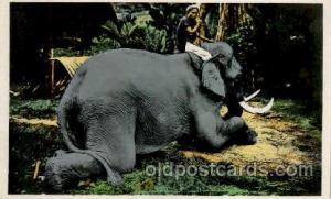 Tonkin Vietnam?  Elephant, Elephants, Postcard Post Card writing on back