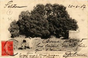 CPA Le Chene Cavaignac, pres de Sebdou ALGERIE (749088)