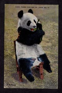 MO Giant Panda Bear Forest Park Zoo St Louis Missouri Postcard  Linen PC