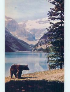Unused Pre-1980 TOWN VIEW SCENE Banff Alberta AB p9077