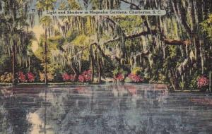 South Carolina Charleston Light And Shadowe In Magnolia Gardens