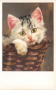 Cat Post Card Old Vintage Antique Cat in Basket Unused
