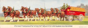 Brewery / Distillery Post Card Budweiser Clydesdale, two postcards connected ...