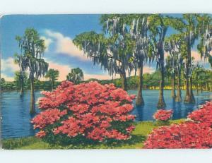 1950's AZALEA FLOWERS AT GREENFIELD LAKE Wilmington North Carolina NC F4222