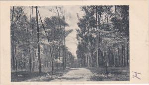 MEMPHIS, Tennessee, 1900-1910's; Dogwood Drive, Overton Park