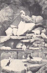 Carl Hagenbeck's Tierpark Stellingen Hamburg Polar Bears Hagenbeck Circus and...