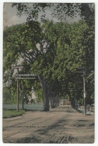 Keene, New Hampshire, View of The Cook Elm, West Street, 1908