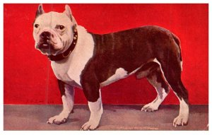 Dog  , Bulldog