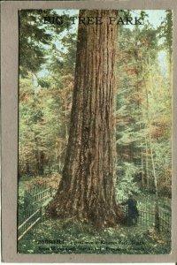 Postcard WA Seattle Ravenna Big Tree Park Roosevelt Giant Tree 2652N