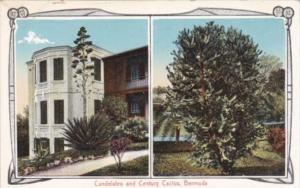 Bermuda Candelabra and Cenntury Cactus