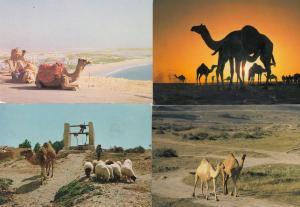 Dhofah Agadir Tunusia 4x Arabian Camel Postcard s