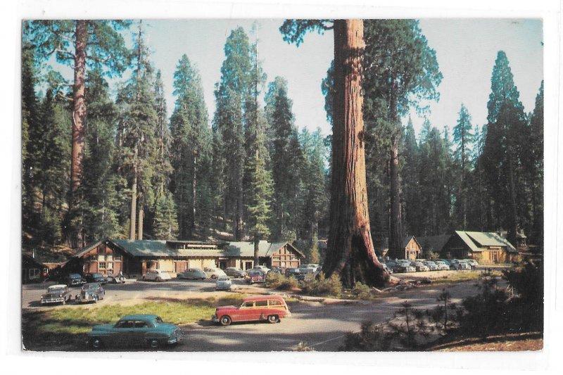 Sequoia National Park Giant Forest Village Tourist Lodge Stores Vntg CA Postcard