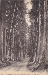 NIKKO, Japan, 1900-1910´s; Cyptomeria Road