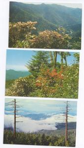 Great Smoky Mountains National Park Views ( 3 cards )