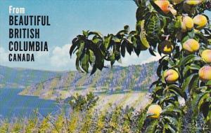 Canada Peach Orchards Okanagan Valley British Columbia