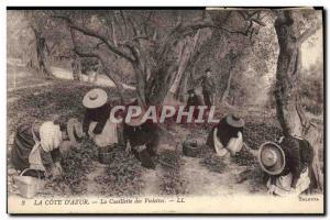 Old Postcard picking violets Cote d & # 39Azur