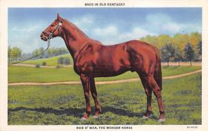 Man 'O War The Wonder Horse Horse Racing Trotter, Postcard Unused
