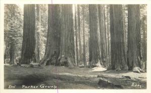 1920s Sequoia Parker Group California RPPC real photo postcard 64 Eddy