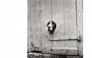 Postcard Springer Spaniel Looking Out 1950-58 (John Gay) by English Heritage