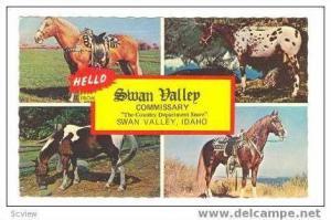 Western Horses, Swan Vally, Idaho, 40-60s