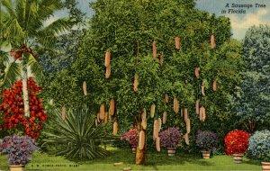 FL - Sausage Tree
