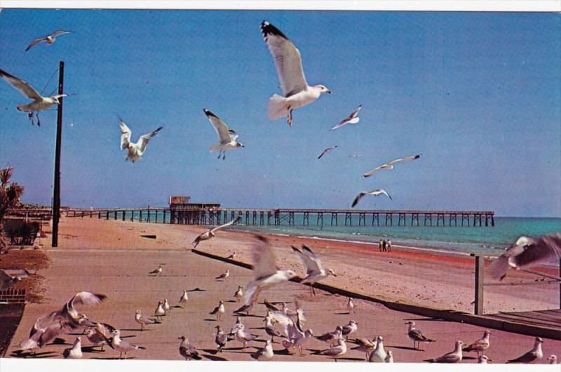 Sea Gulls & Fishing Pier , MYRTLE BEACH , South Carolina , 40-60s