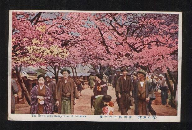 061365 JAPAN five-colours cherry trees at Arakawa Vintage PC#1