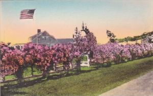 Massachusetts Cape Cod Rose Hill Chatham
