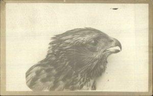 Bird's Head Eagle Falcon? Elk City Idaho ID c1910 RPPC Postcard UNUSUAL xst