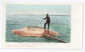 Fish Pot Yellowstone Nat'l Park1900 UDB Detroit Photographic
