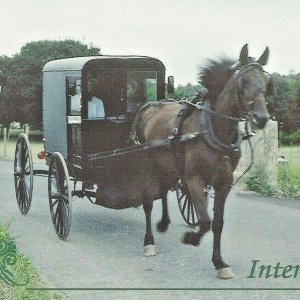 Intercourse, Pennsylvania Amish Horse Carriage Buggy Couple Farm Treeline