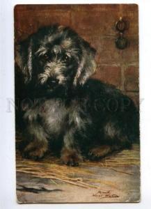 144033 HUNT Pet DANDIE DINMONT TERRIER by WATSON vintage TUCK