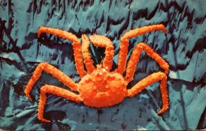 Alaska Giant Alaskan King Crab
