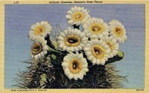 Sahuaro Blossoms - Misc, Arizona AZ