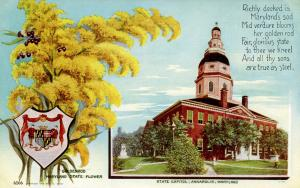 State Flower & Capitol - Maryland, Goldenrod