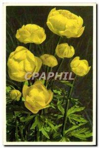 Old Postcard Fantasy Flowers Trolle d & # 39Europe