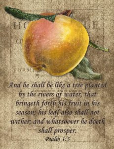 Single Postcard, Psalm 1:3 He Shall Be Like a Tree Planted By The River