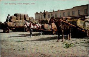Memphis Tennessee~Worker Handling Cotton~Stacking Bales on Wagons~Foreman~c1910