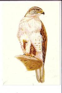 Ferrugious Hawk, North Amer4ican Birds, Reader's Digest