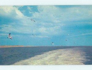 Pre-1980 NATURE SCENE Nags Head On Outer Banks North Carolina NC AD3904