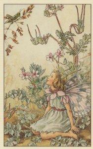 Stork Storks Bill Fairy Old 1940s Book Stunning Postcard