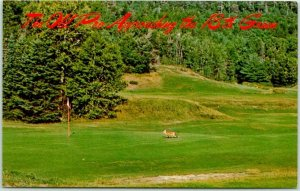 Vintage GOLFING Comic Postcard FOX Old Pro Approaching the 18th Green c1960s
