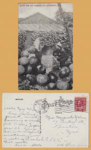Large Fruit-Jumbo Apples - How we do things at Amherst, Nova Scotia - 1921