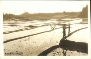Bali Indonesia Rice Fields Canadian Pacific Cruise Issued Real Photo Postcard