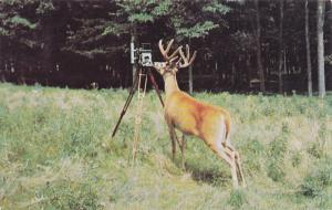 Where's the Birdie?, Vacationland Scene, Deer with Camera, United States, PU-...